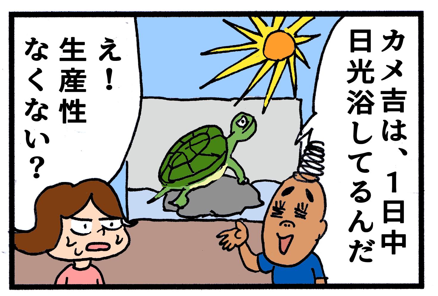 時期 亀 冬眠 亀の冬眠方法。期間はいつからいつまで?水換えや場所はどうする?